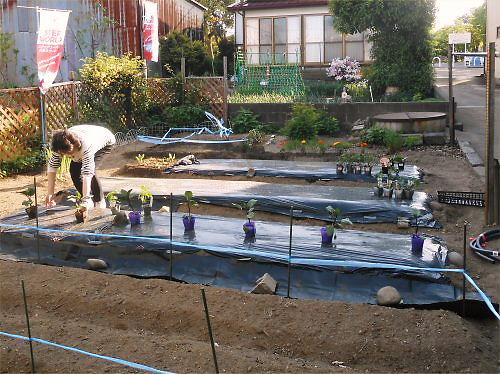 05 500 20140511 LL庭Planting02Reiko