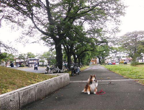 01 500 20140522 桜並木、久々のGateball Erie01