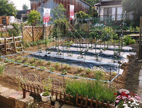 02 500 20140525 支柱菜園全景