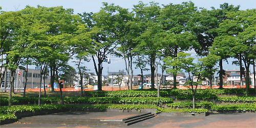 01 500 20140531 HotMorning 新井小横に公園づくり02ZU