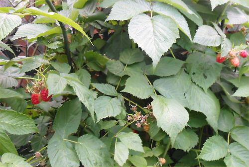 02 500 20140616 raspberry