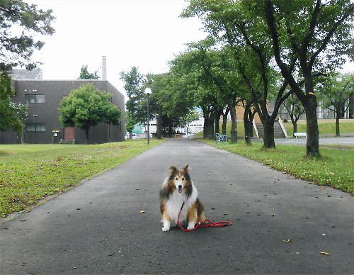 20 500 20140624 桜並木:下枝切り勤研 Erie