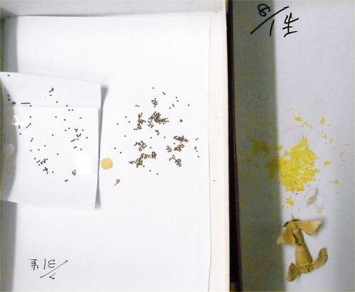 06 500 20140802 蚕の卵2段階、蛾交尾