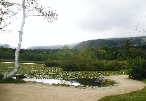 03 500 20140914 いもり池WithR02 湖畔、白樺