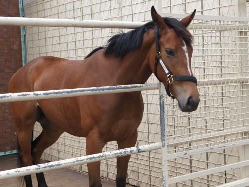 ウインティアラ、馬房