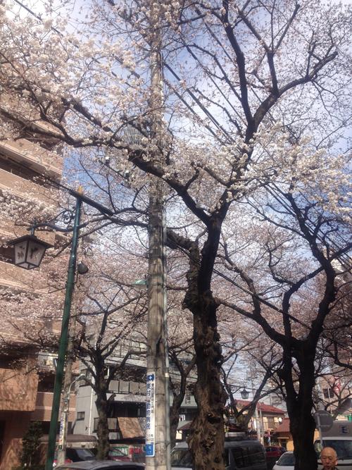3:29桜