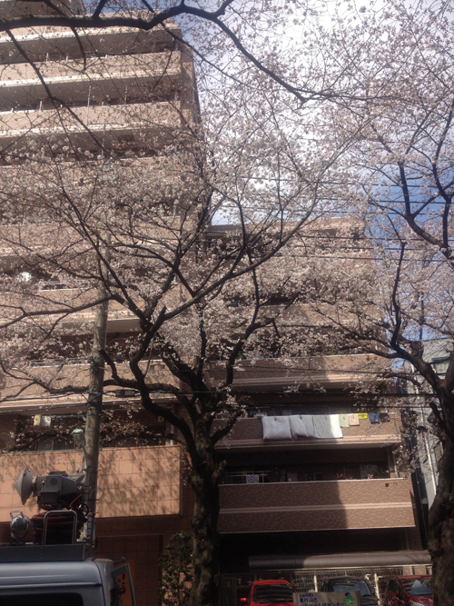 3:29桜2