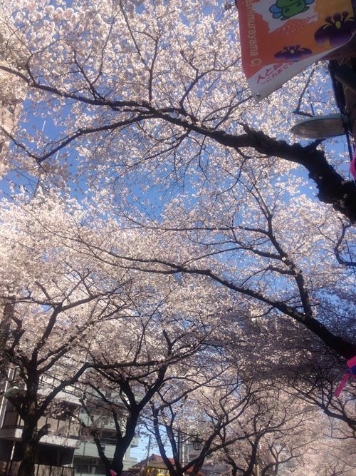 3:31桜