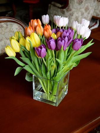 tulipho1