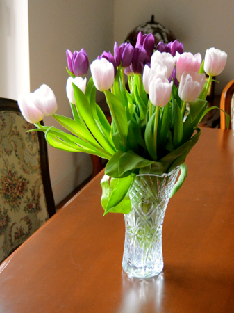 tulipho2