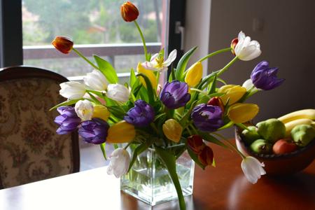 tulipho5