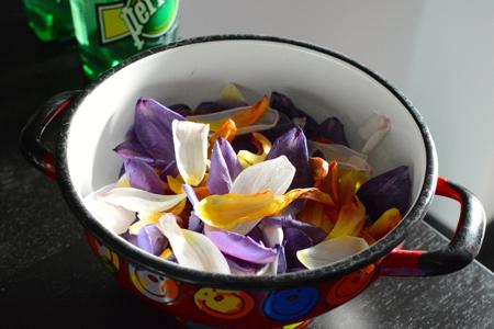 tulipho9