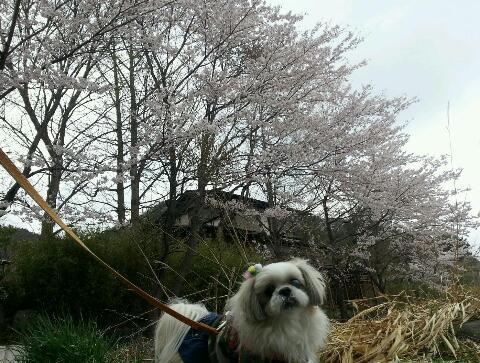 2014_4kawagutiko31.jpg