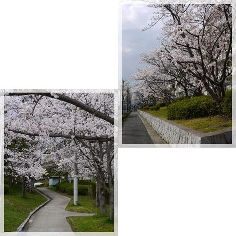 2014花見散歩2