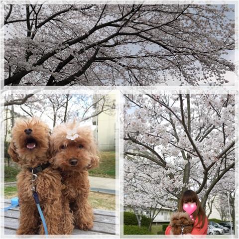 2014花見散歩3