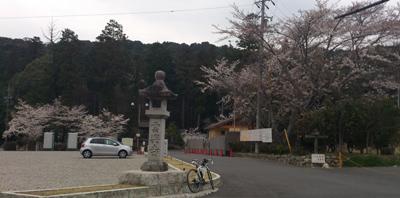 雲興寺の桜