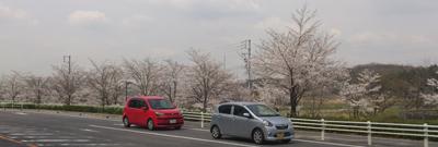 長久手・公園西の桜