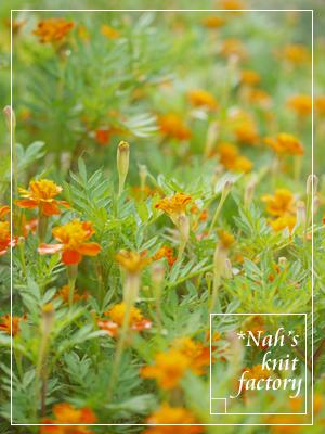 marigolds2014-05.jpg