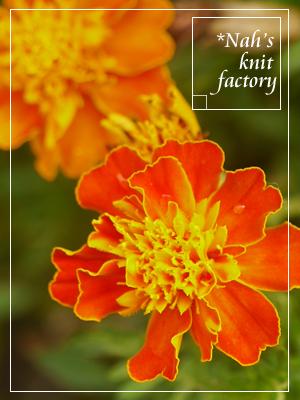 marigolds2014-07.jpg