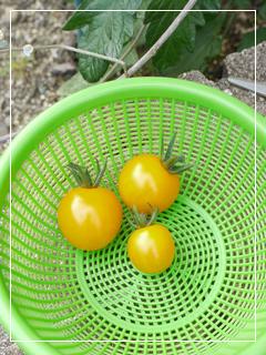 tomato2014-07.jpg