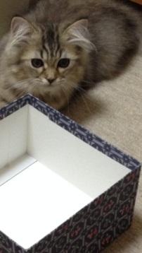 箱入りポルカ1