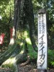 金龍神社10