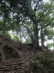 愛宕山登山2-27