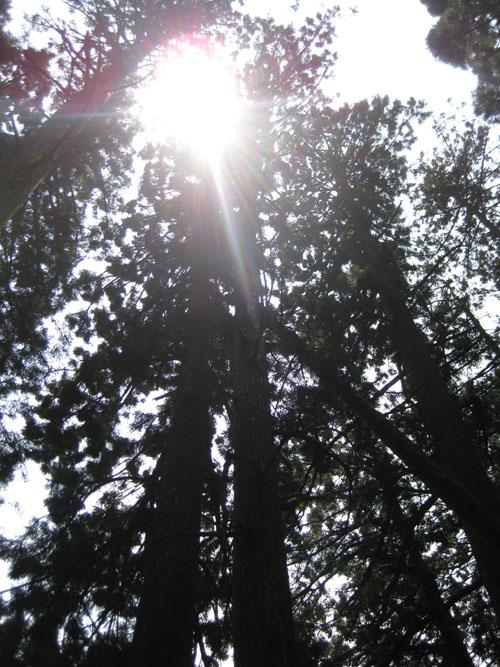 愛宕山登山4-31
