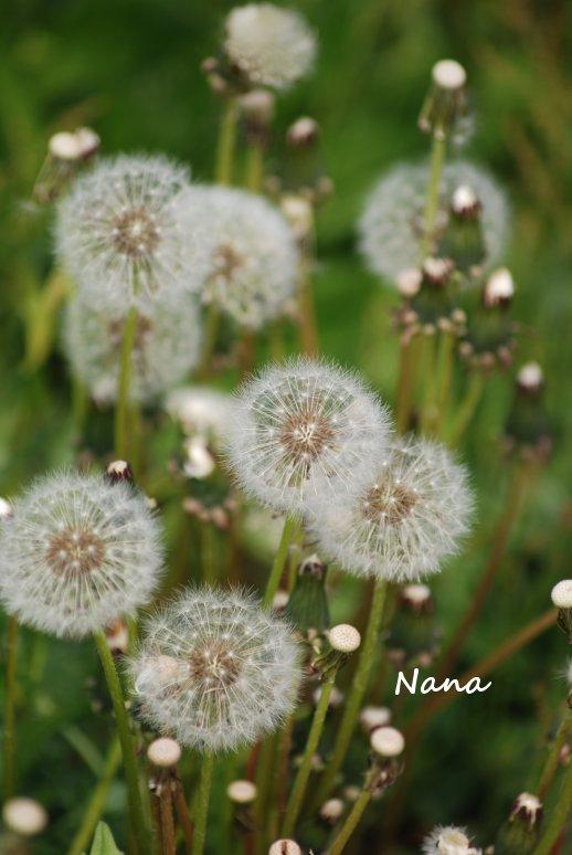 flower1-25.jpg