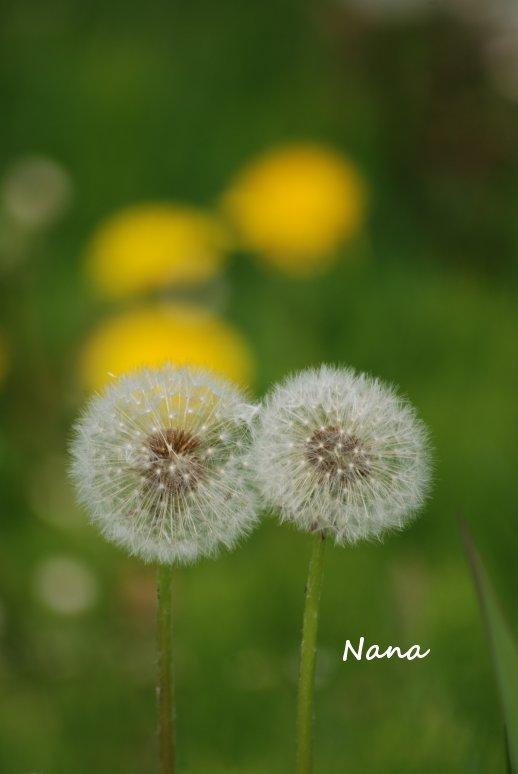 flower1-26.jpg