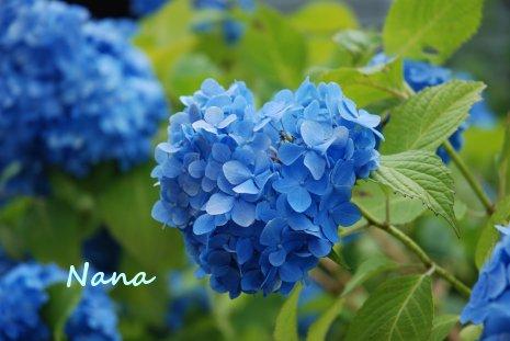 flower1-27.jpg