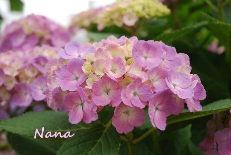 flower1-28.jpg