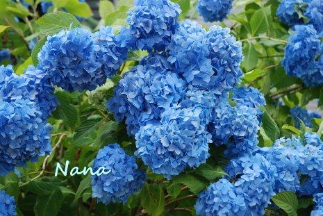 flower1-29.jpg