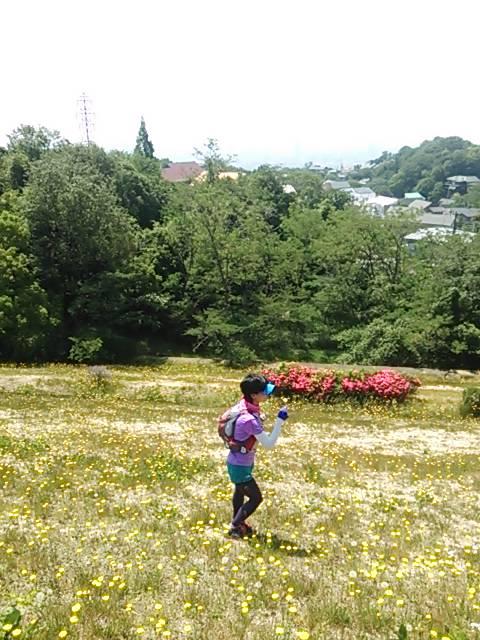 六甲北山貯水池花畑