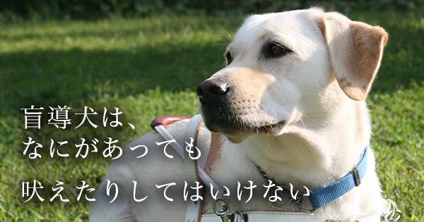 11141_00.jpg