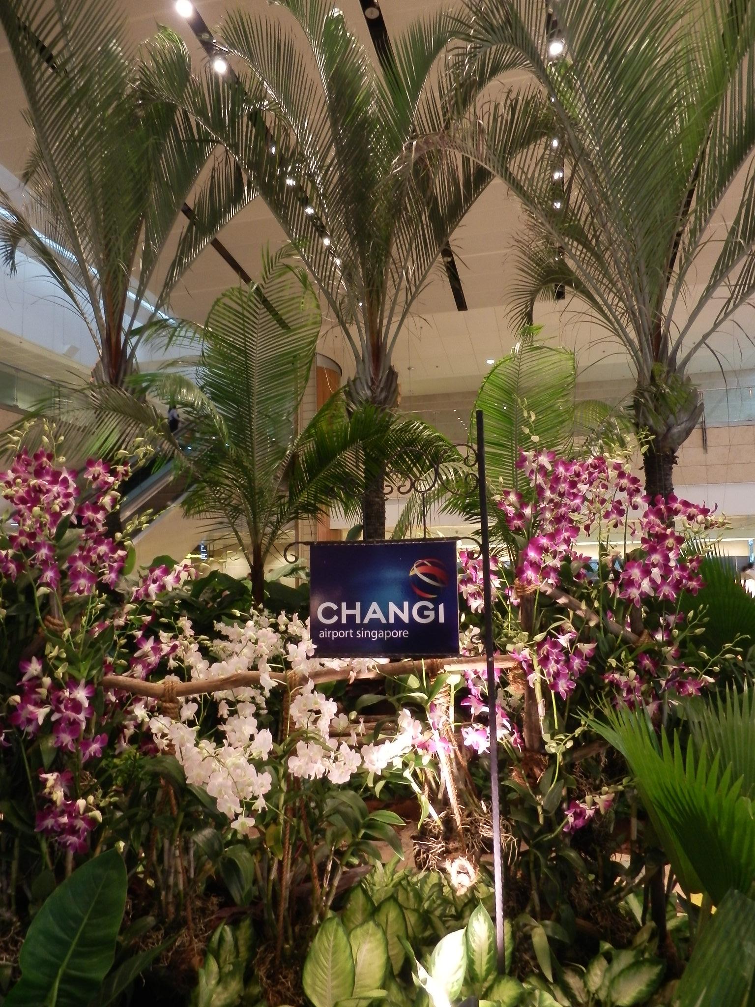 チャンギ空港の花