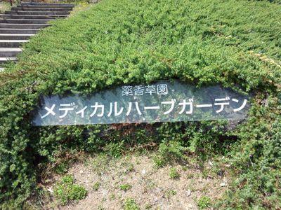 garden_1703.jpg