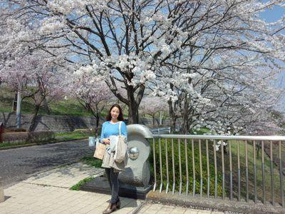 sakuramae_1711.jpg