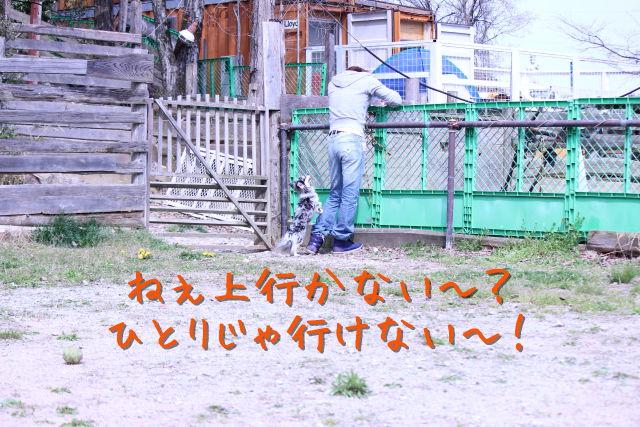kako-1fcwVmSiLx8zh5ao.jpg