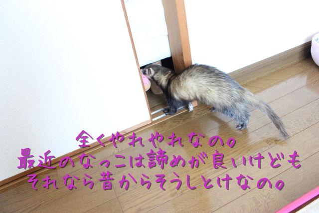 kako-Nc3A4XebyplmM0xx.jpg