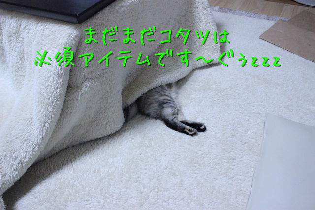 kako-VY46EHw7rgup9ePL.jpg