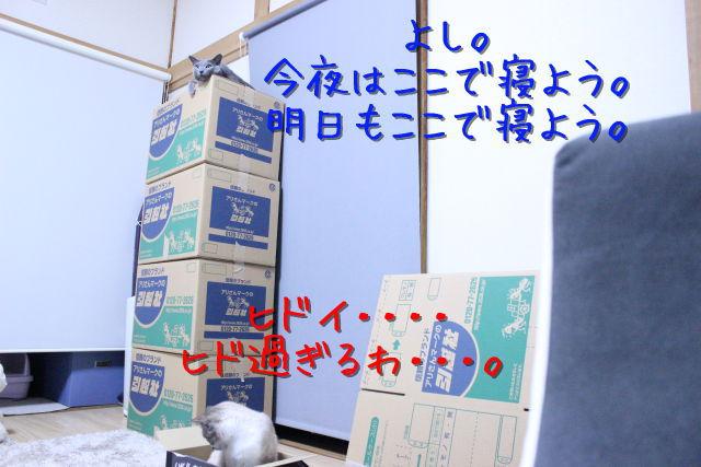kako-g5SB4EtQ5uIpc4Mm.jpg