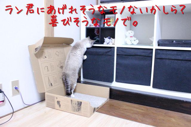 kako-ia81YoYHFwSfUI46.jpg