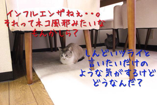 kako-rPmRnaylxi920Pum.jpg