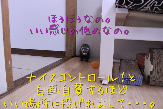 kako-tRNhhqs3DQ8Jv4TV.jpg