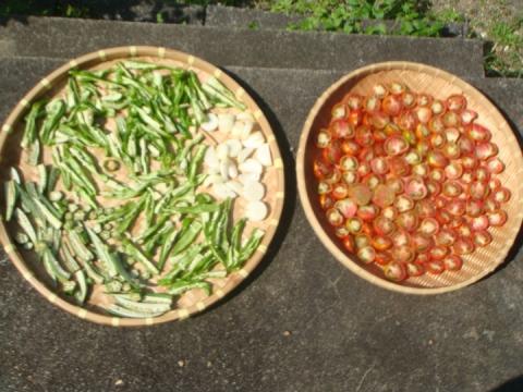 乾燥野菜づくり