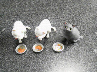 猫ごはん4