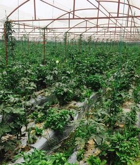 strawberryfaram220714a.jpg
