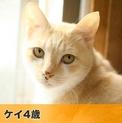 pet2014-04-01-10-1457190362_th123.jpg