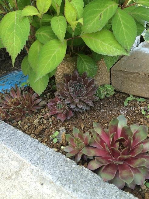 花壇センペル